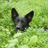 Milo in Trassenheide beim Heidelbeerpflücken © Pfotentour