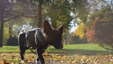 Milo im Treptower Park © Pfotentour
