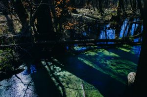 Sumpfgebiete im Naturschutzgebiet Gränert © Pfotentour