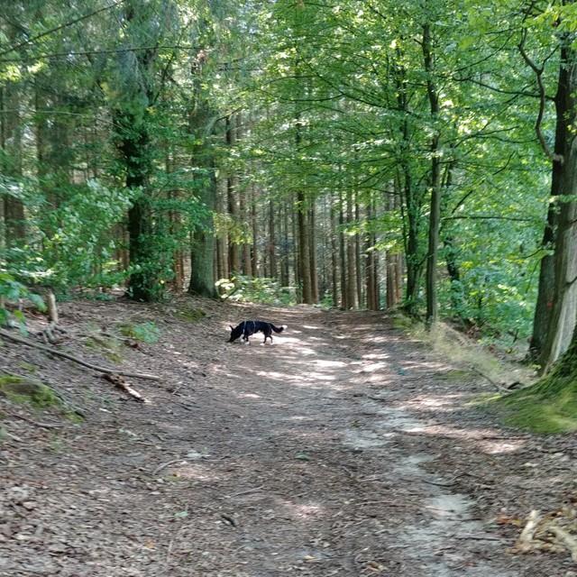 Wald am Papillensee © Pfotentour