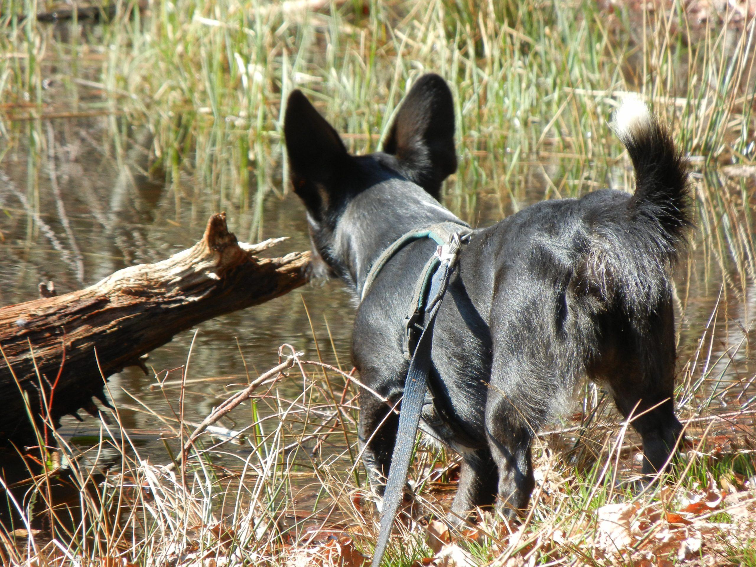 Hundesuche: Milo auf der Suche © Pfotentour