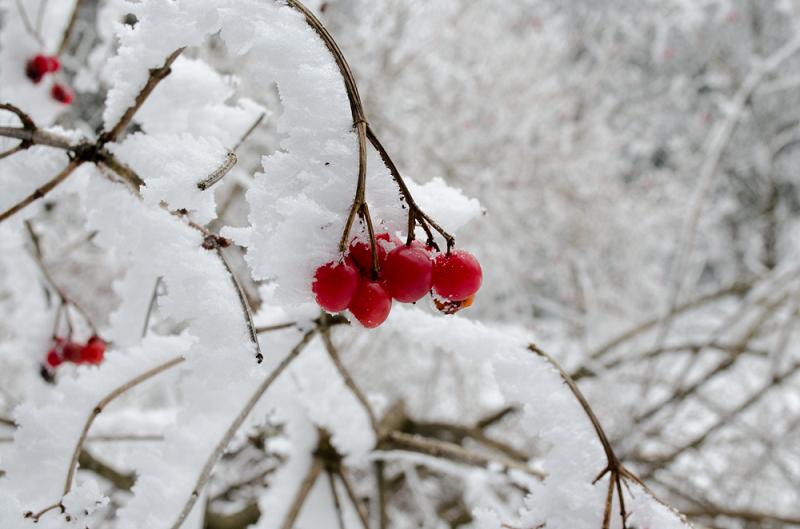 Winter im Harz © Pfotentour